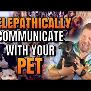 How To Telepathically Communicate With Your Pets | Communicate With Animals | Law of Attraction